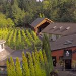 Muse Winery, Jane  Ellmann, Sidney