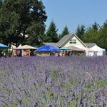 Cowichan Valley Lavender Labyrinth & Farm, Christopher Carruthers, Cowichan Valley